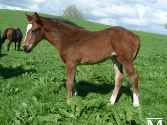 Atlante - Reputedly Filly