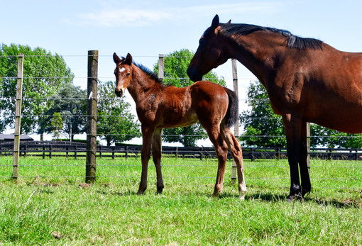 TIME TEST - L'ACCORD COLT
