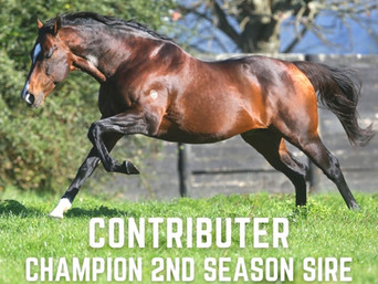 CONTRIBUTER CROWNED CHAMPION 2ND SEASON SIRE