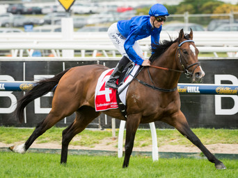 MARES IN FOAL TO DUAL GR.1 WINNER CONTRIBUTER IN HIGH DEMAND AT NZB 2017 NZB BROODMARE SALE