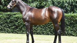 PROFESSIONAL DISPLAY BY PUCCINI 2Yo AT THE TRIALS