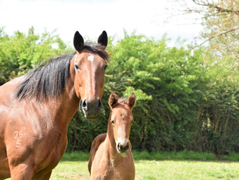 CONTRIBUTER - L'ACCORD FILLY