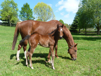 Shocking - Lily L'Amour Filly