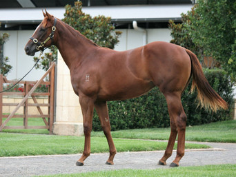 LOT 351 OCEAN PARK - DUE DILIGENCE FILLY
