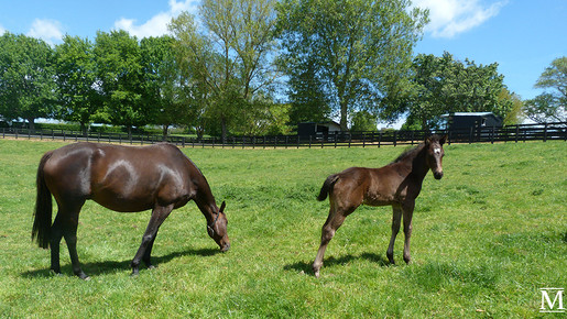 He's Remarkable - Philly Lane Filly