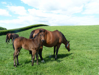 He's Remarkable - Danbelle Filly