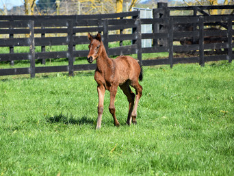 CONTRIBUTER - SISTER VERONICA FILLY