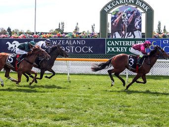 CONTRIBUTER COLT DOMINATES RICCARTION 2 YEAR OLD CONTEST