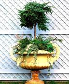 Garden Design Urn with Juniper Standard_