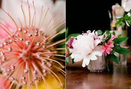 pincushion-protea-peony-azalea-pink-cora