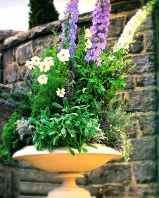 GardenDesignDelphiniuminFootedUrn_edited