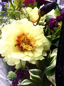 Gorgeous yellow peony from the garden