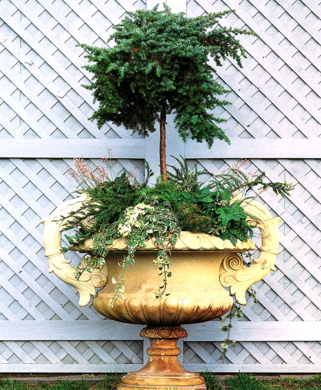 Garden Design Urn with JuniperStandard_edite
