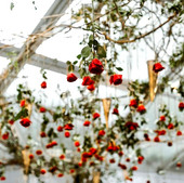 Dancing Under a Magical Rose Canopy_edit