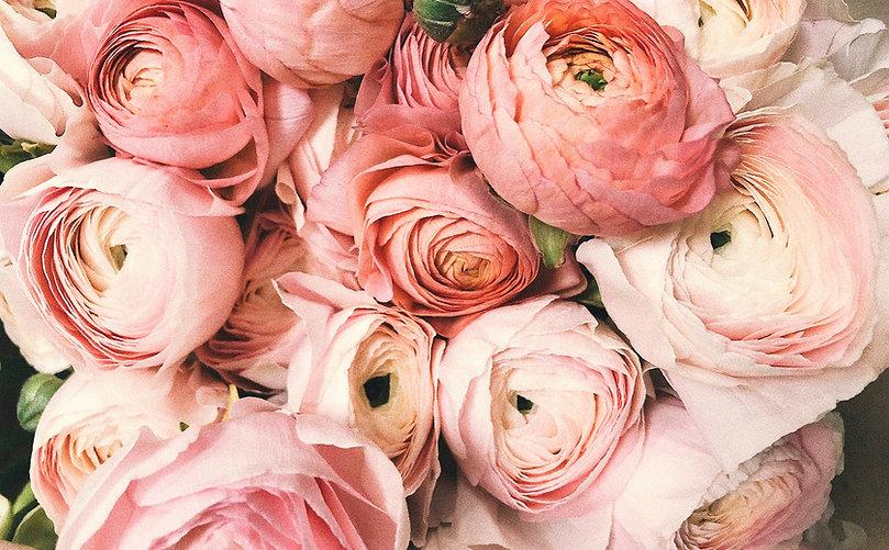 Ranunculus Pink 1_edited.jpg