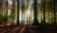 bosco ecologia bioedilizia