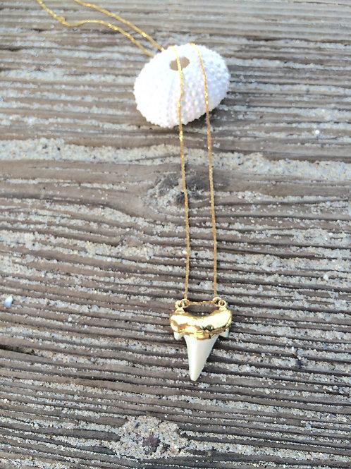 Beach {Moon} Babe 24k Shark Tooth {Med} - Gold