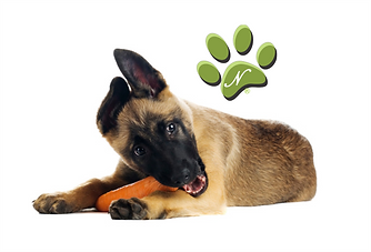 dog with carrot logo.png
