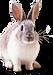 Инкубатор Кагальницкая Комбикорм для кролико