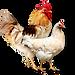 Инкубатор Кагальницкая Комбикорм для птиц