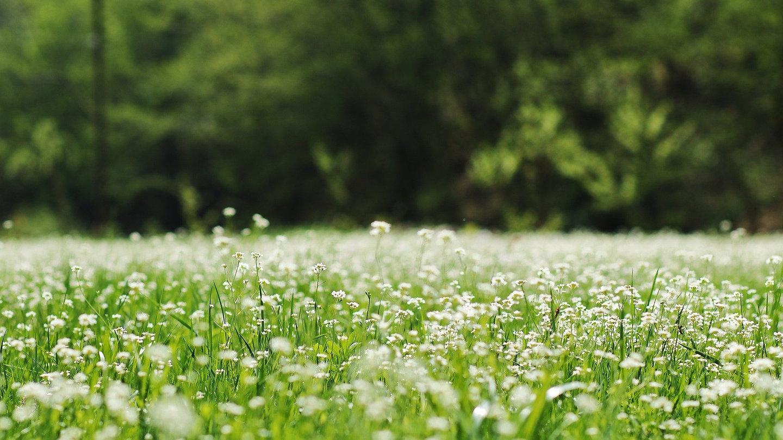meadow-4568533_1920_edited.jpg