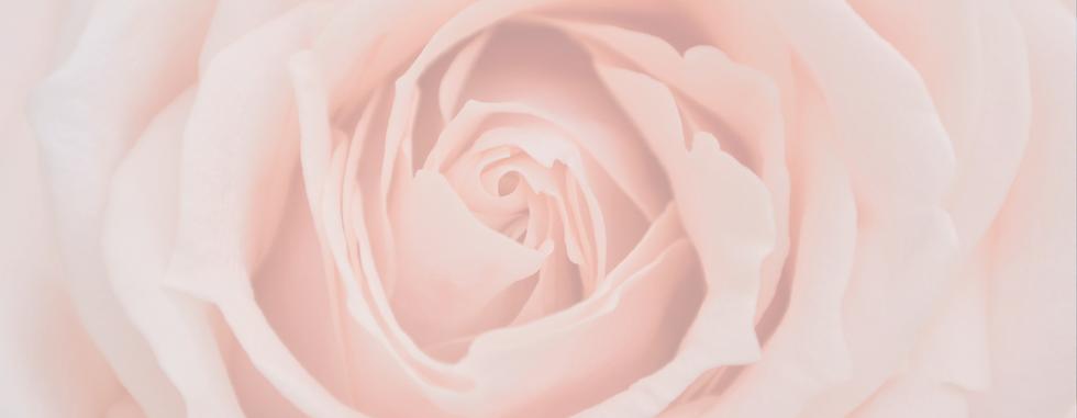 rose-bg@2x.png