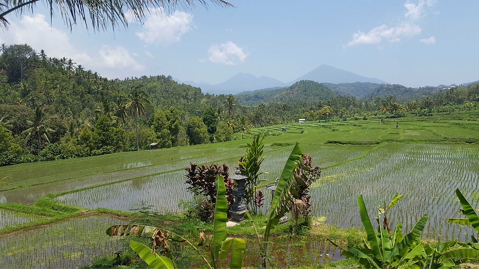 rijstvelden-en-bergen-op-weg-naar-pupuan_optimized_edited.png