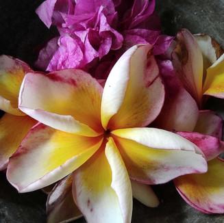 bloemen-in-schaaltje_optimized.jpg