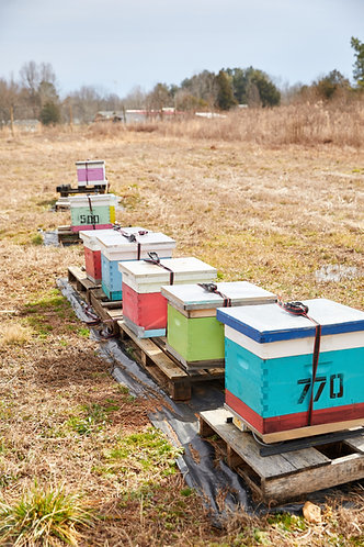 Lease A Hive On Site (Please call for details)
