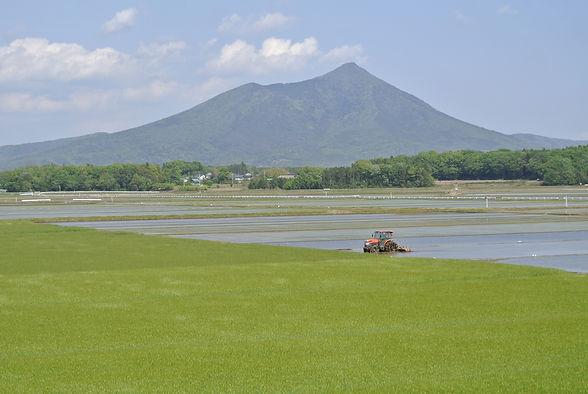 筑波山と稲作.jpg