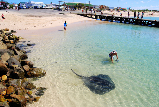 stingrays-in-struisbaai-ahrbour.jpg