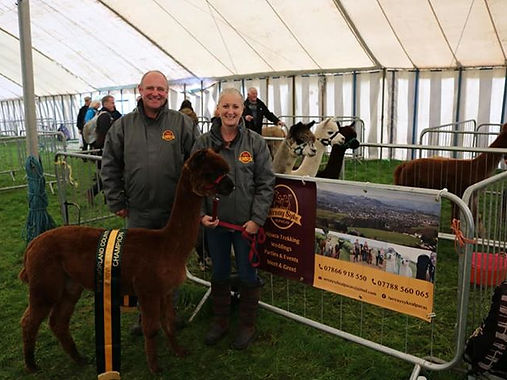 Westmorland County Show, held annually in September. We won 1st place and Champion brown male with our boy Carmelo