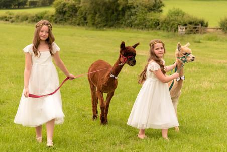 Bridesmaids & Alpacas