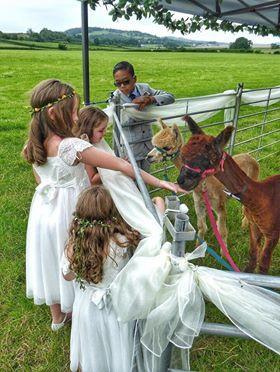 Bridesmaids & Alpacas.jpg