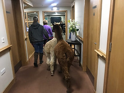 Walking the corridors