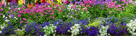flower bed.png