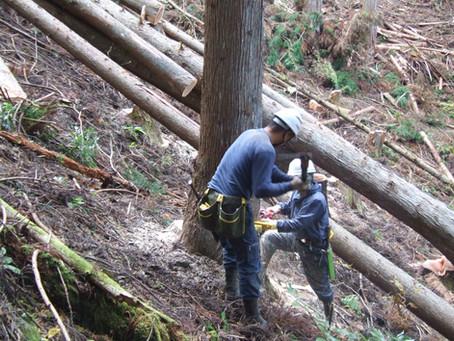 木材として使う木は、いつ伐採すると良いのか。