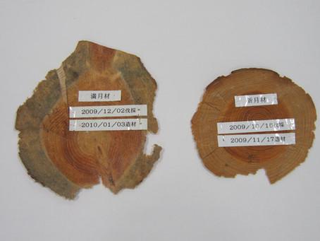 薪ストーブの薪は、秋冬の月の暦に合わせて伐れ