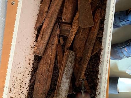 木の家に住むと、カブトムシ が長生きします。