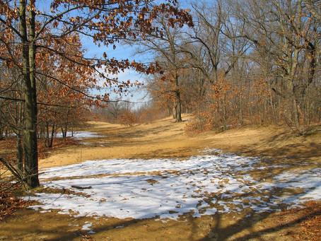 Up Next: Oak Openings Endangered Species Walks!