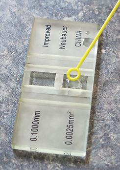 Slide for measuring Nosema