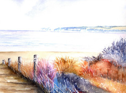 160. Studland footpath colourful grasses
