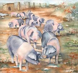 91. Pigs