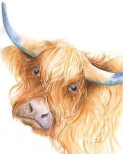 66. Highland Cow