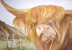 12. Cow in Wales