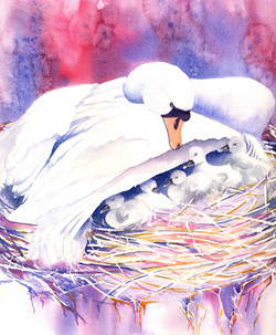 182. Mother Swan and babies in nest