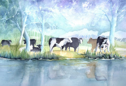 139. Cows on the River Stour