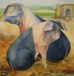 33. Pigs