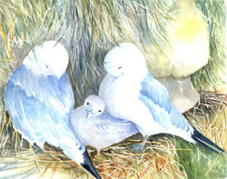 135. Birds with baby