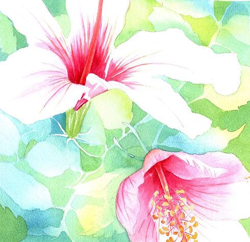 143 Hibiscus 2.jpg